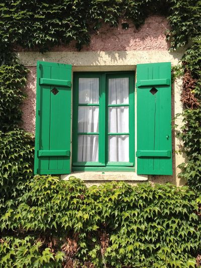 Window Building Exterior Green Green Color Nature No People Plant Window