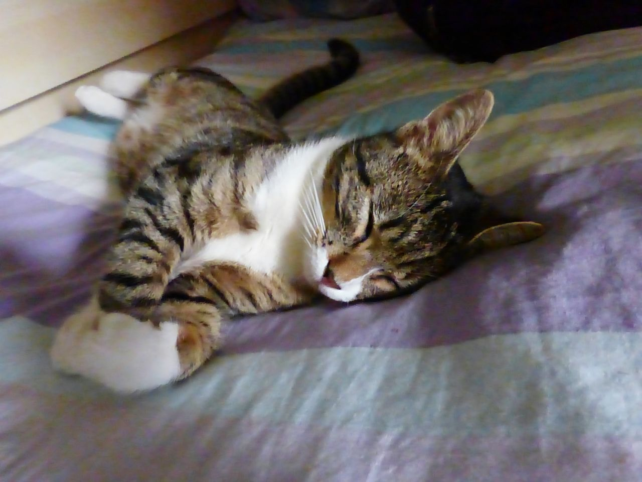 domestic cat, one animal, animal themes, pets, domestic animals, relaxation, mammal, feline, lying down, sleeping, resting, indoors, cat, no people, whisker, close-up, day