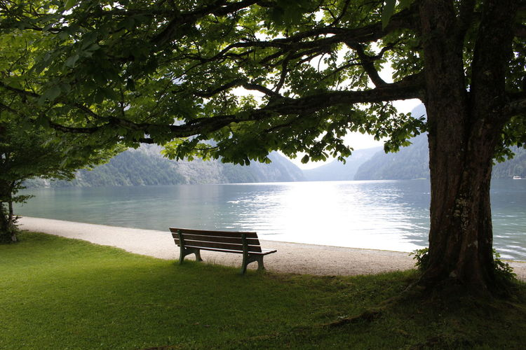 Tree Plant Bench Water Seat Nature Trunk Tranquility Tree Trunk Beauty In Nature Absence Lake Tranquil Scene Day Growth Park Park Bench Scenics - Nature Empty No People Outdoors