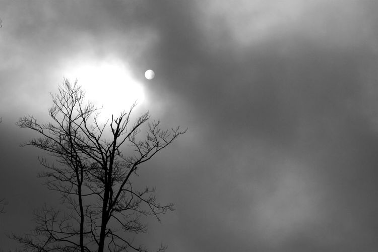 Astronomy Bare Tree Beauty In Nature Branch Crescent Day Half Moon Low Angle View Moon Nature No People Outdoors Scenics Sky Solar Eclipse Tranquil Scene Tranquility Tree