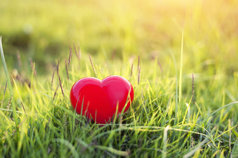 Close-up of red heart shape on grass in field