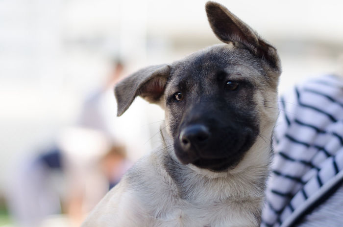 Puppy portrait Funny Mongrel Young Animal Themes Canine Close-up Day Dog Domestic Animals Ears Focus On Foreground Kennel Mammal Mix Breed Multibreed No People One Animal Outdoors Pets Portrait Puppy