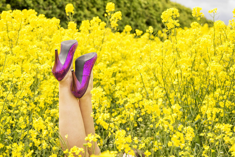 Low Section Of Woman Amidst Fresh Yellow Flowers Blooming In Field