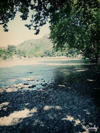 Water Sunny Green Lovee 🌲🌳🌴🍀🌱💛💚