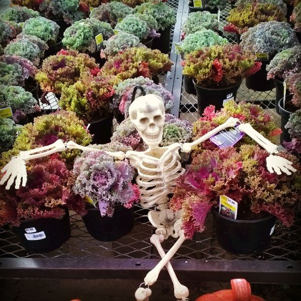 Relaxin at work Lowes Halloween Skeleton Chillenwiththehomies