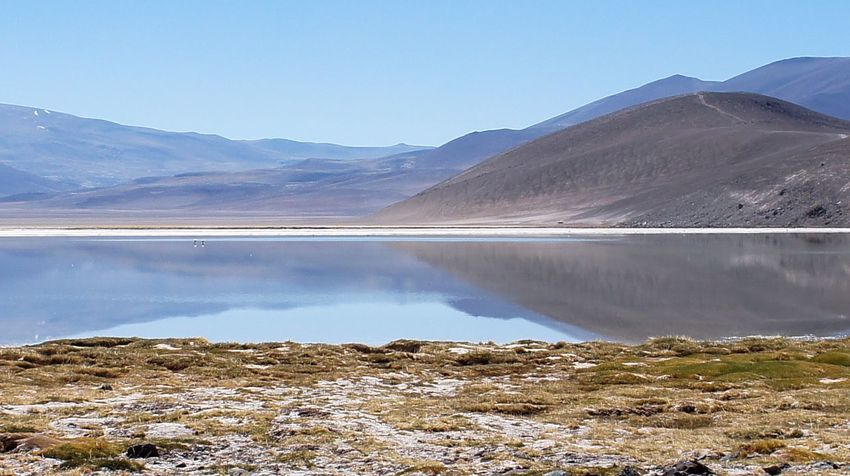 Atacama / Chile 🇨🇱 Laguna Santa Rosa Lake Mountain Nature Beauty In Nature Landscape Scenics Outdoors Tranquil Scene Water No People Tranquility Mountain Range Day Clear Sky Sky Salt - Mineral