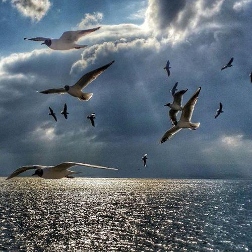 Son kez benim için uçun güzel kuşlar...