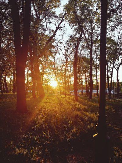Nature Beauty In Nature No People Sky Day EyeEm Gallery EyeEm Nature Lover Drzewa Trees Tree Natura Fotografia 📷 Photography Beauty Drzewo Twierdzamodlin Love ♥ First Eyeem Photo Pictrue Drogaartysty Zachód Słońca Zachod Zachód _słońca Słońce SłońceTakieWOczy Słońce I Cień