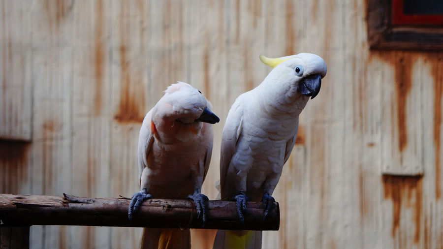 Two birds perching on wood