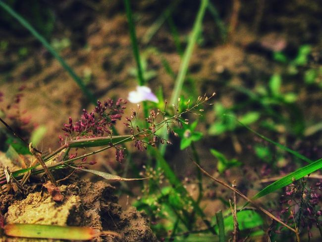 different focus point Small Flowers Grasses Are Beautiful Too No People Plant Insect Nature Day Outdoors Close-up Animal Themes Freshness Animals In The Wild Flower