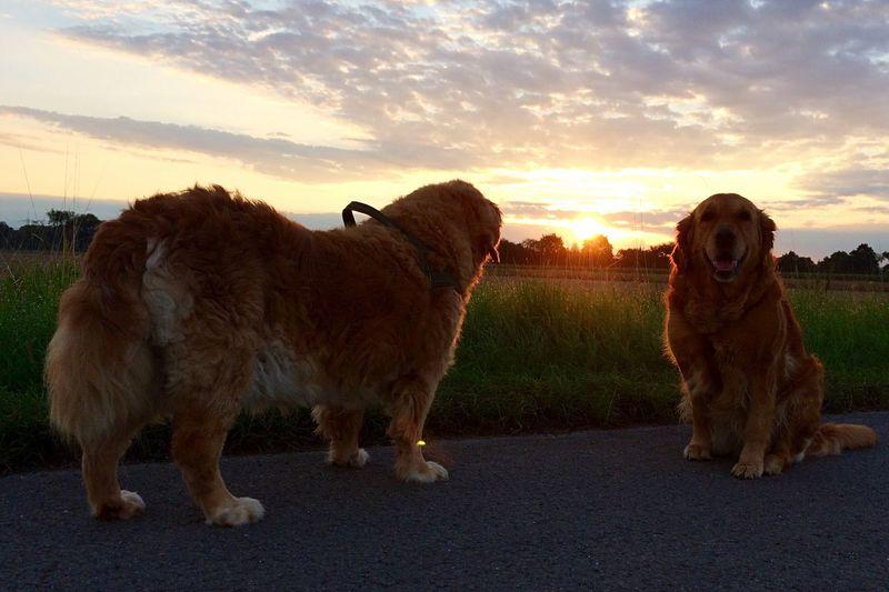 Bruno&Greta Dog