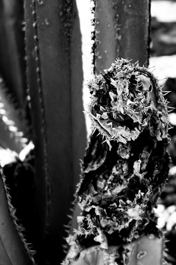 This Cactus looks like a crazy chameleon face skeleton! Walking Around Outdoors Cactus Thephotographer Surreptitious Night Tucson Arizona  Photography Eyemphotography Skeleton Desert Beauty