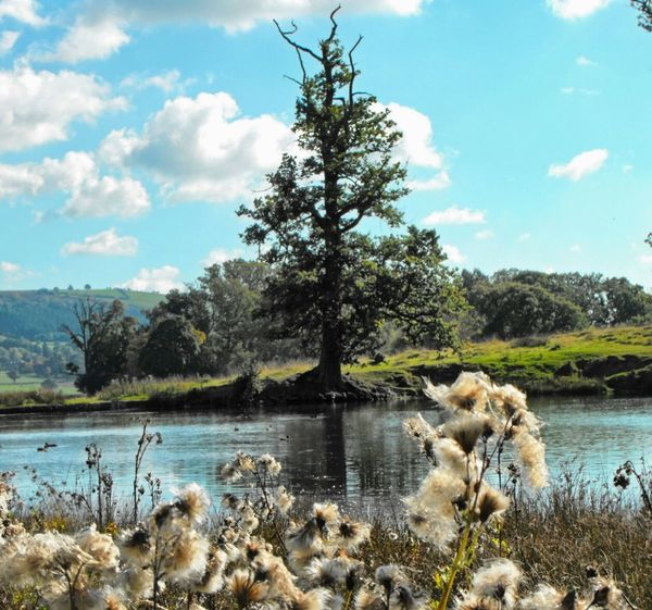 Fluffy... Trees Clouds Water Reflections Pond Welshpool Wales Landscape Autumn осень Fall