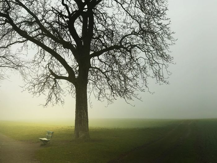 Bench Foggy Myterious Switzerland Landscape Tree Tranquility Tranquil Scene Nature Bare Tree Beauty In Nature Fog Grass Field Scenics Outdoors Sky Lone No People Branch Mist Day