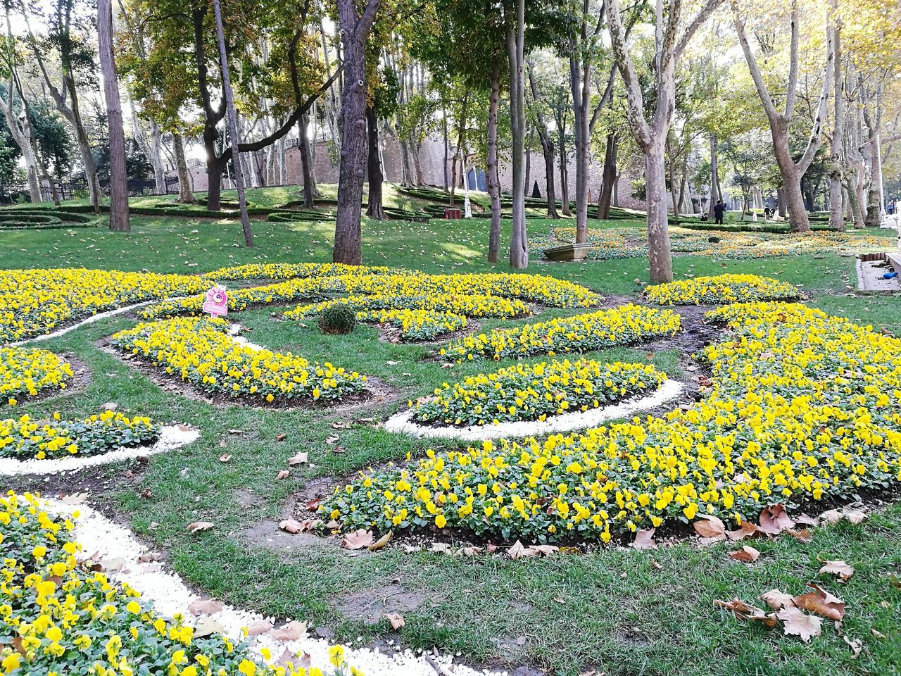 flower, growth, yellow, green color, nature, plant, park - man made space, flowerbed, beauty in nature, outdoors, tree, grass, day, no people, botanical garden, fragility, flower head, freshness