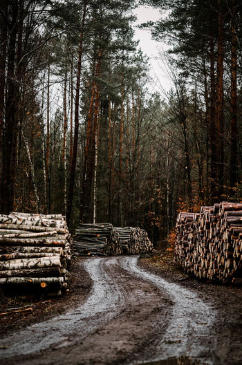 Tree Forest Log Nature Plant Stack No People Wood Deforestation Timber Wood - Material Land Day Lumber Industry Firewood Tranquility Large Group Of Objects The Way Forward Direction Outdoors WoodLand Way Poland Poland Eyeem Kaszuby
