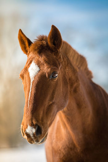 Animal Head  Animal Themes Close-up Day Domestic Animals Focus On Foreground Horse Mammal Nature No People One Animal Outdoors Portrait