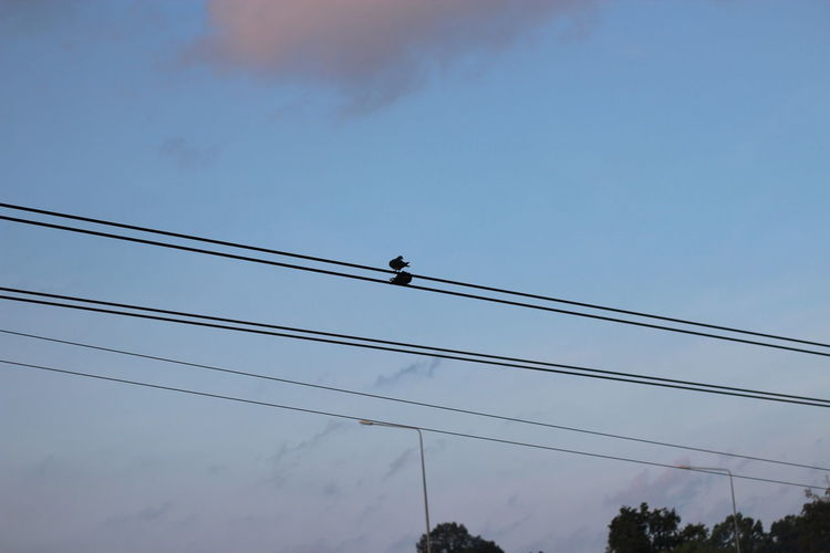 Low angle view of silhouette birds on cable against sky