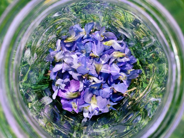 Outside Glass Jar Viola Sororia Purple Plant Purple Flower Directly Above Nature Freshness Close-up Glass - Material High Angle View Fragility No People Container Glass Flower Head