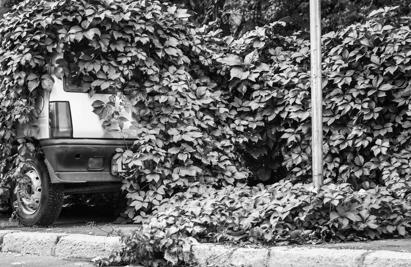 Little Car  Nature Always Wins Dont Hide Urbanphotography Car Black And White Black&white Nature Conquers Blackandwhite Photography Simplicity Blackandwhite Black And White Collection  Streetphotography City Street B&w Minimalism Welcome To Black