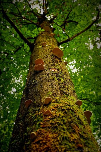 Tree Treescollection Tree Art Trees And Nature Hikingadventures Beauty In Nature Sonyalpha