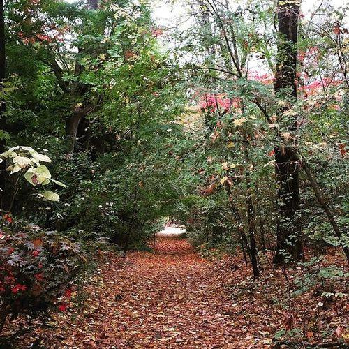 Tmarvlous Addyanddaddyadventure Forest Fall foliage
