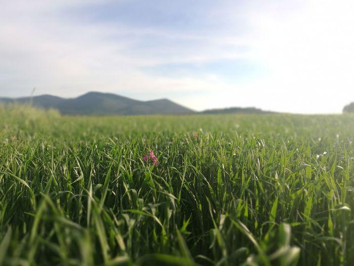 La Maremma Colori Della Natura Piante E Fiori Spring Maremma Toscana, Un Paradiso Per Gli Occhi E Per Il Cuore