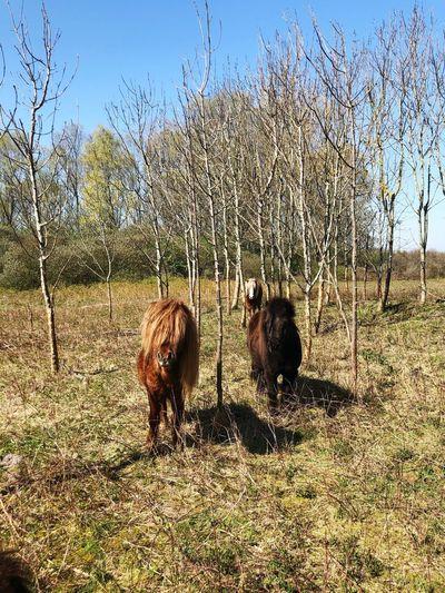 Pony time Trees