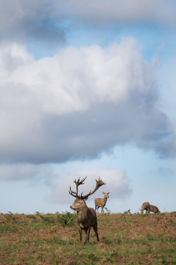 Deer Postcode Postcards Richmond Park, London Richmond, VA Antlers Cloud - Sky Clouds And Sky Day Deers Nature Outdoors Wildlife
