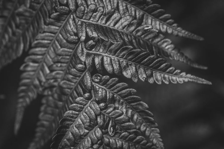 Natural Pattern 2/2~ Black & White Art And Craft Backgrounds Beauty In Nature Close-up Day Design Fern Focus On Foreground Fractal Beauty Growth Indoors  Leaf Monochrome Natural Pattern Nature No People Pattern Plant Plant Part Selective Focus Textile Textured