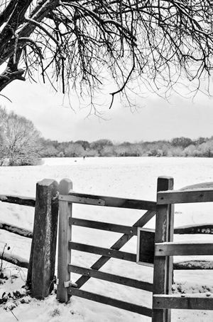 Wilderness Area Exploring Gateway Winter Wood - Material Snow Railing Cold Temperature Outdoors Lake Day No People Nature Tree Bare Tree Tranquility Beauty In Nature Scenics Branch Landscape