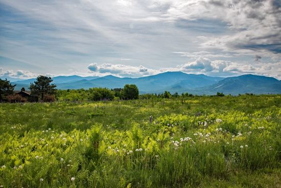 View of Mount Washington from Sugar Hill, NH. White Mountain National Forest The Great Outdoors - 2016 EyeEm Awards The Essence Of Summer Nature_collection Landscape_Collection Landscape Landscape_photography Mount Washington  New Hampshire Lupine Fields Mountains Beauty Beauty In Nature Wildflowers Tranquility EyeEm Nature Lover Eye4photography  EyeEm Best Shots EyeEm Masterclass Springtime Nature's Diversities Spring Flowers Grass The Following My perfect escape! Lost in the mountains!