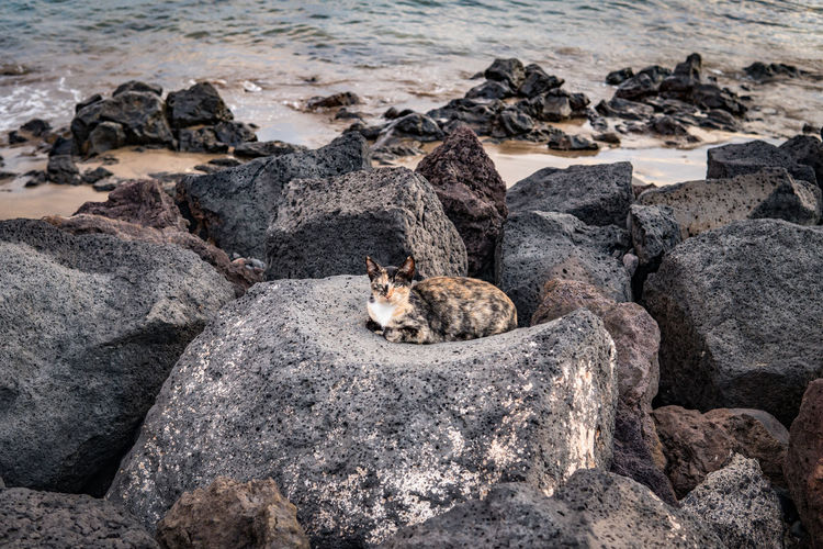 Nature No People Lanzarote Canary Islands Canarias Travel Volcanic Landscape SPAIN Cat Animal Themes Animal Mammal Solid Rock Rock - Object One Animal Animals In The Wild Sea Animal Wildlife Vertebrate Water Beach Day Land Stray Cat