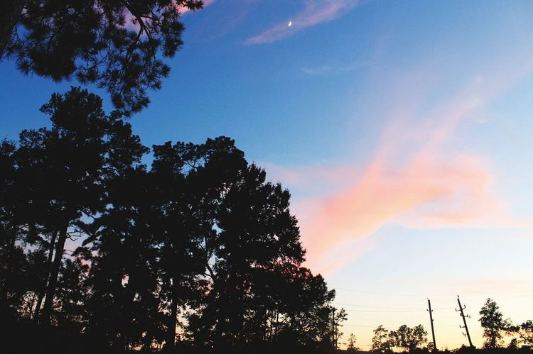 Sunset Silhouette Sky Scenics Beauty In Nature Forest No People Outdoors Nature Day Nature Photography United States Houston Texas Beauty In Nature Moon Low Angle View Sky And Clouds Crest Moon Silhouette Tree