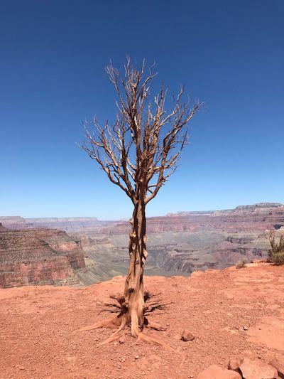 Tree EyeEm Best