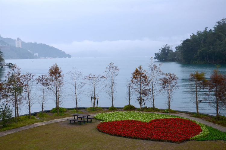 Calm Fog Heart Lake Lakeshore Landscape Misty Tree Water