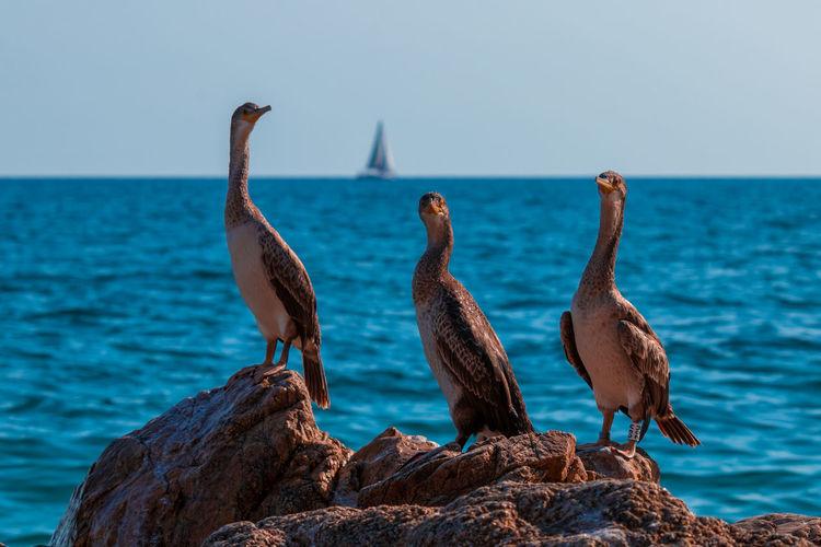 Birds perching on rock by sea against sky