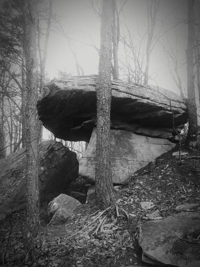 Table top rock Beauty In Nature B&W Collection Appalachian Mountains Tree Close-up Sky Focus On Shadow Bark Tree Trunk Woods Shadow Long Shadow - Shadow Branch Treelined