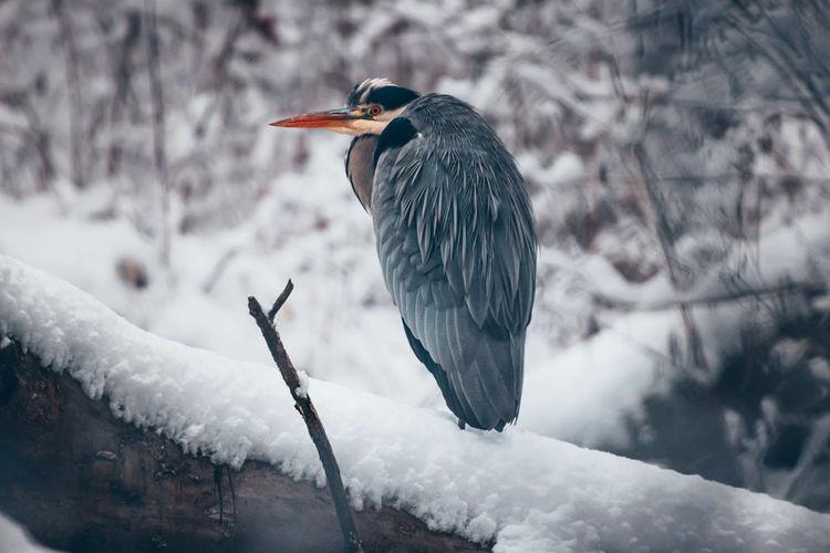 Bird perching on branch in snow