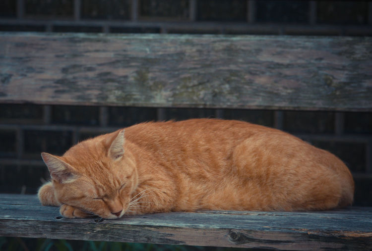 stray cat on the bench Animal Themes Cat Lying Down Mammal No People One Animal Relaxation Relaxing Sleeping