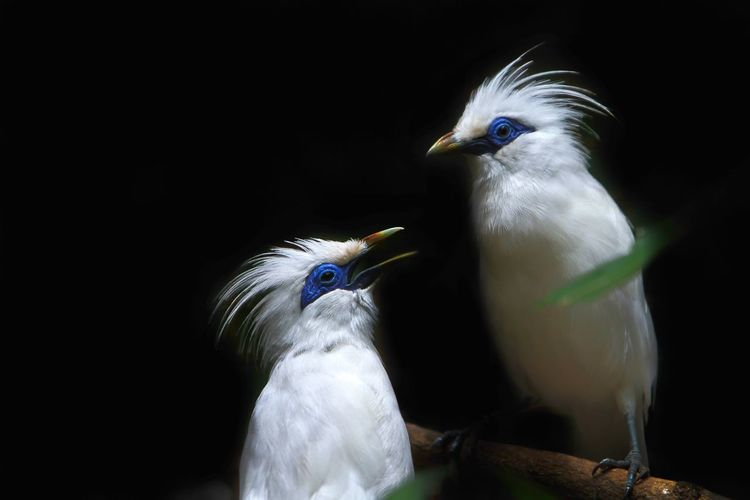 Close-up of birds perching on black background