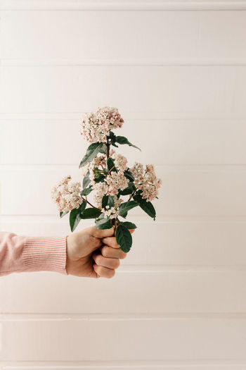 Hand holding white flowering plant against wall