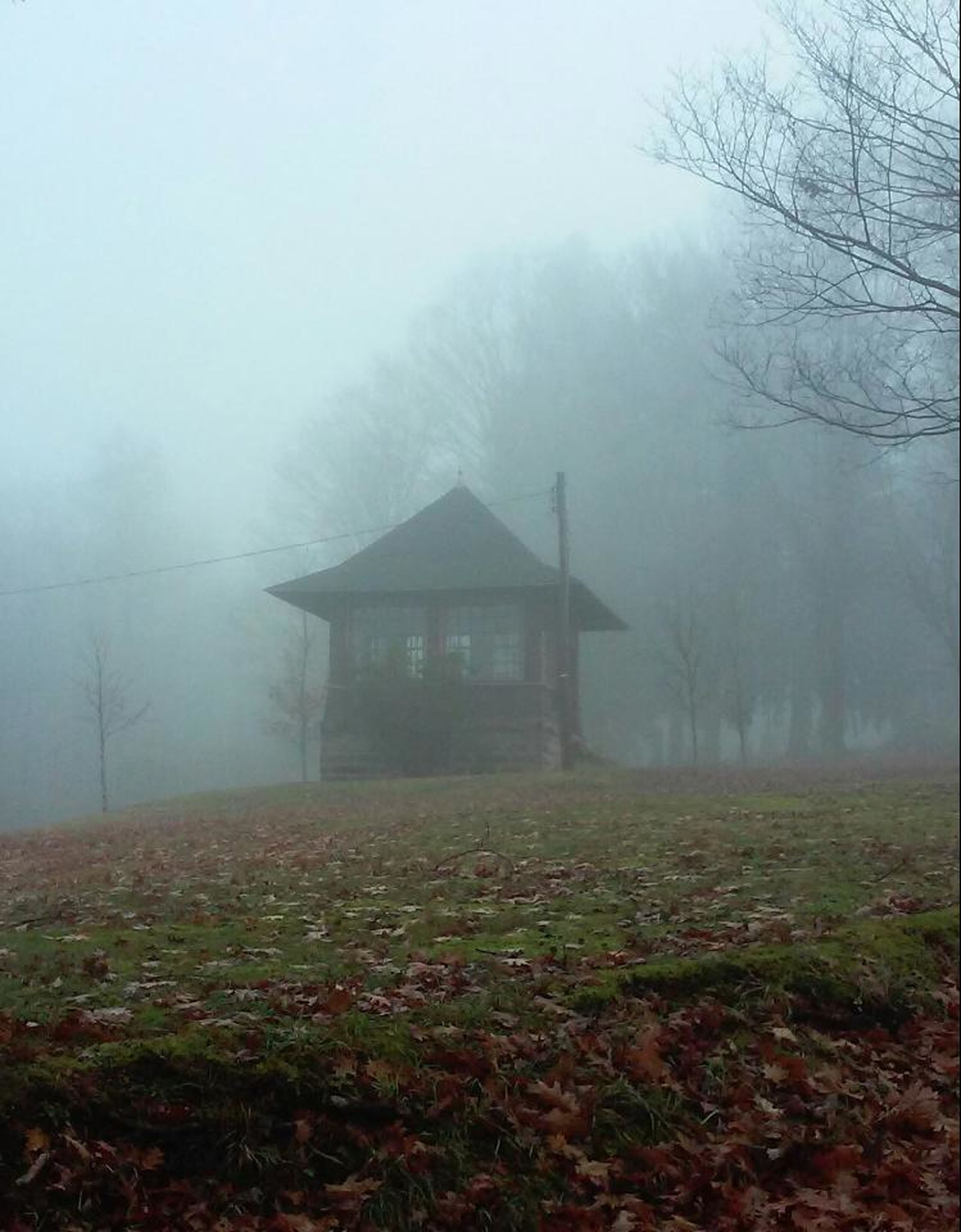 fog, nature, tranquility, scenics, winter, landscape, no people, tree, agriculture, outdoors, beauty in nature, mountain, day