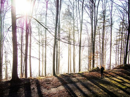 Light Painting Showcase: December üetliberg Nature Nature_collection EyeEm Nature Lover Beautiful Nature Forest In The Forest A Walk In The Woods Trees TreePorn Shadow Light And Shadow Light Lights Zurich, Switzerland Zürich Colors Switzerland Schweiz Enjoying The Sun My Best Photo 2015 The Color Of School