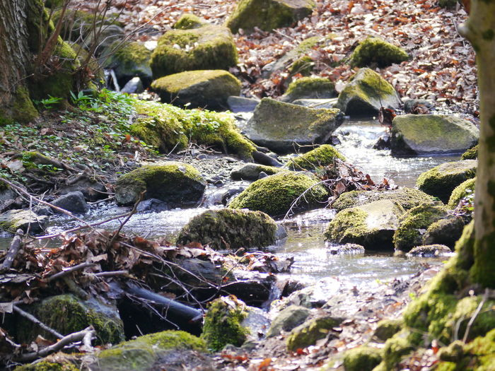 Moss Water Rock