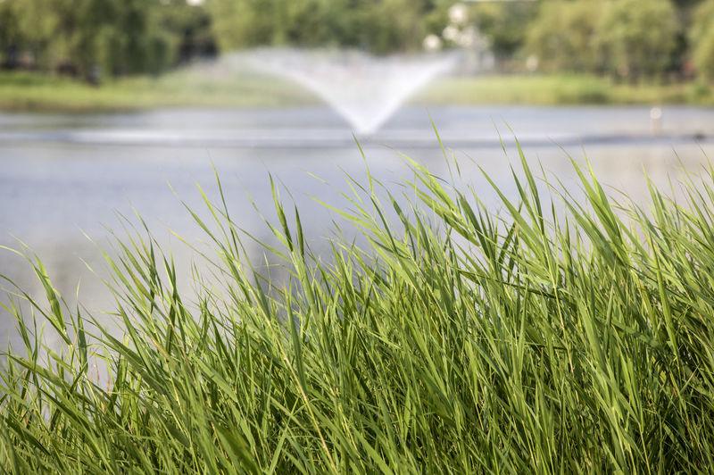 Close-up of green tall grass