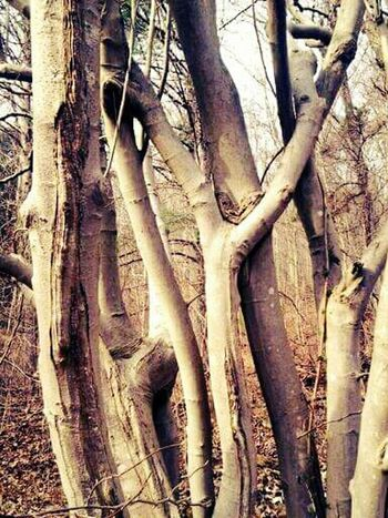 Tree Trunk Tree Branches Treetastic Twisted TwistedWood Twisted Tree Nature_collection Nature Photography Forestwalk Forest Trees