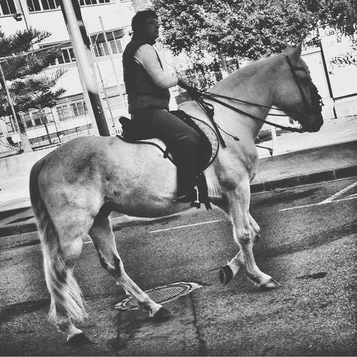 Horse Blackandwhite Shootermag Streetphotography
