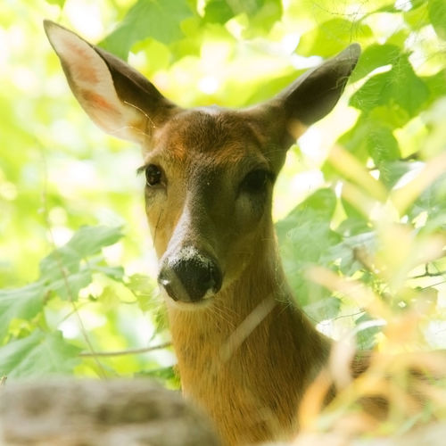 Close-up portrait of deer on tree