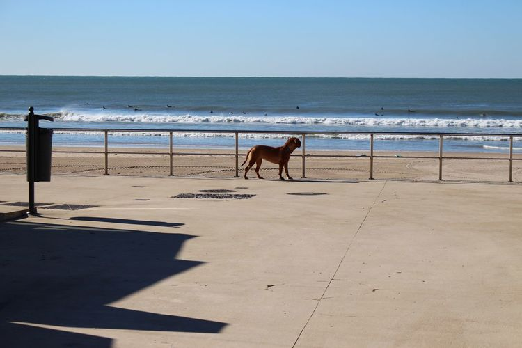 Dog At Promenade During Sunny Day